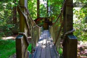 Hidden California - Treehouse Inns